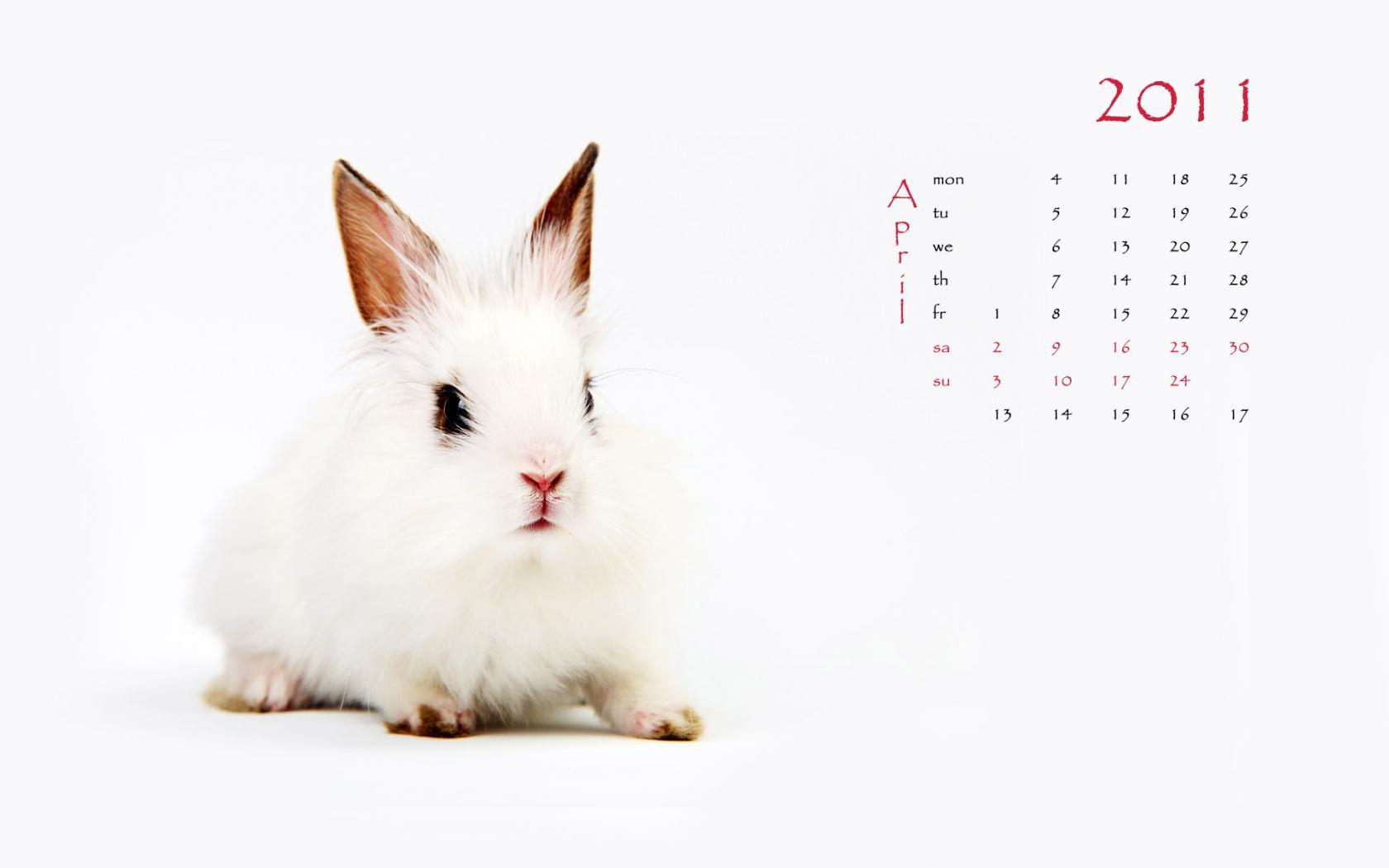 壁纸 动物 兔子 1680_1050