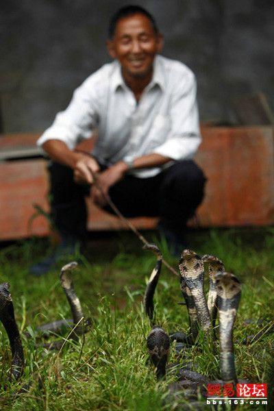 探秘中国第一蛇村 八百人却有三百万条蛇