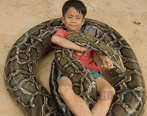 实拍:柬埔寨6岁男孩与巨蟒的传奇生活