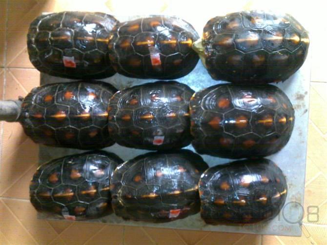 北武当山风景区蛇龟石