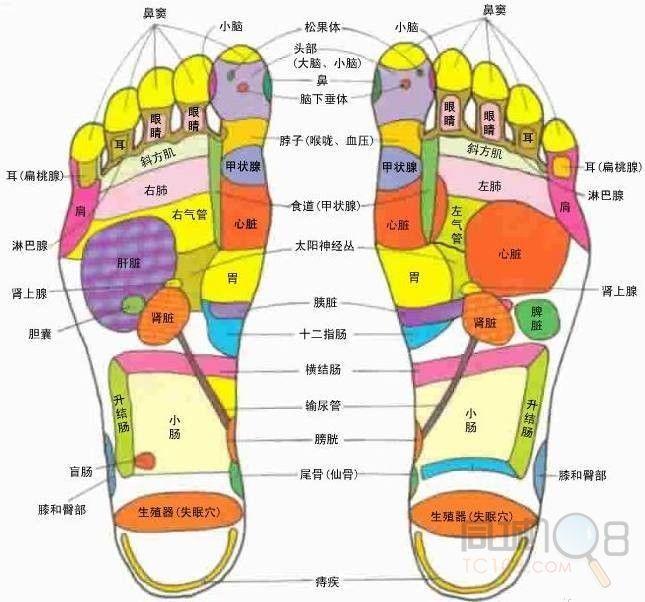 人体脚底按摩穴位图