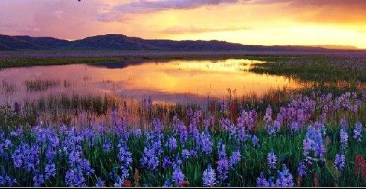 桐庐大奇山--巴比松庄园花海,,薰衣草,向日葵,波斯菊