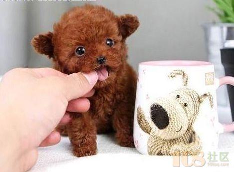 极易模仿动物的照片